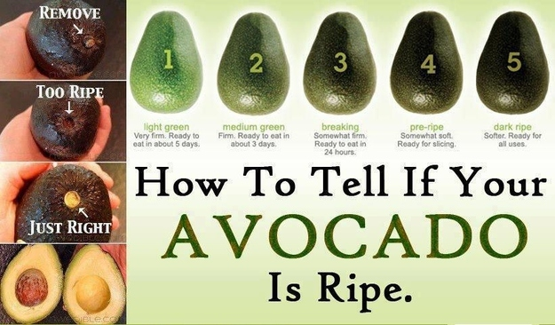 avocado-ripeness
