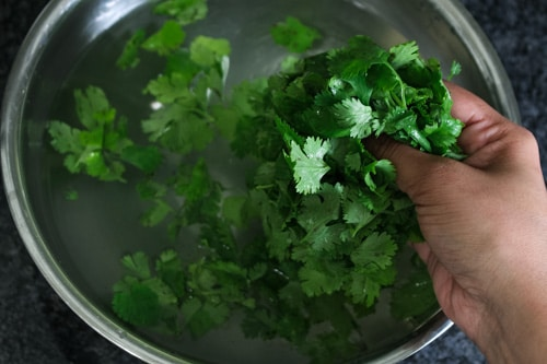 Washed cilantro leaves