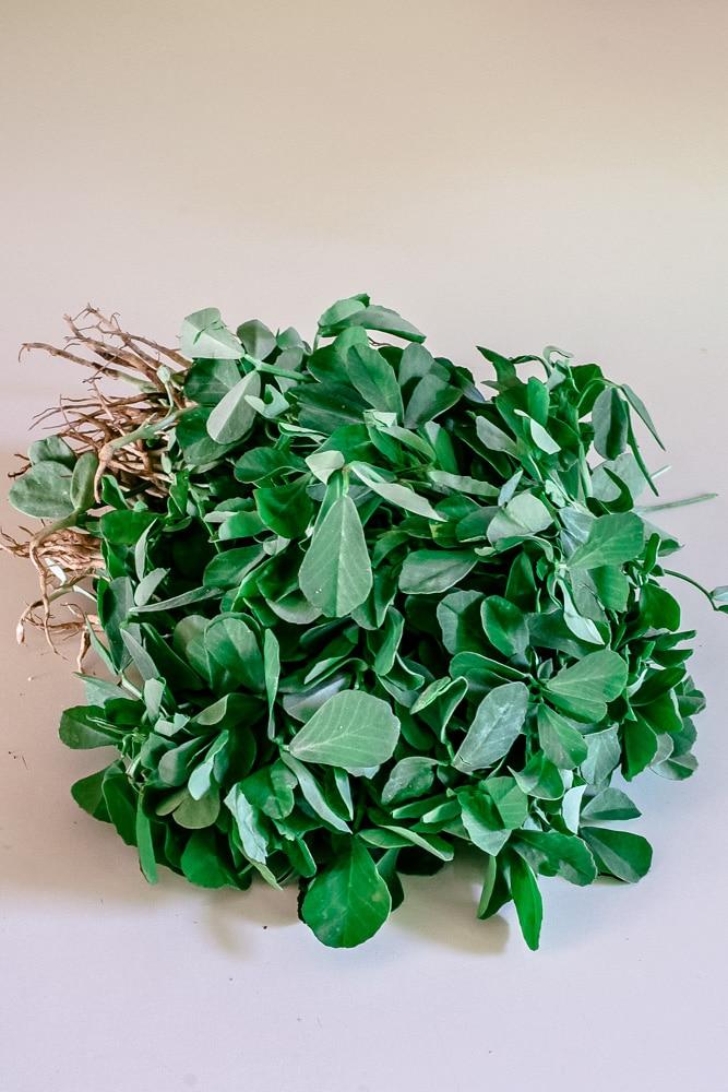 bundle of methi leaves or fenugreek leaves
